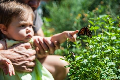sdat_092014_butterfly-19