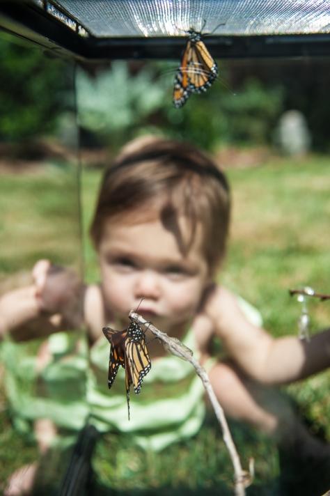 sdat_092014_butterfly-4