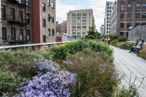 Pollinator Paradise- Fall Bloom along the High Line at 29th Street