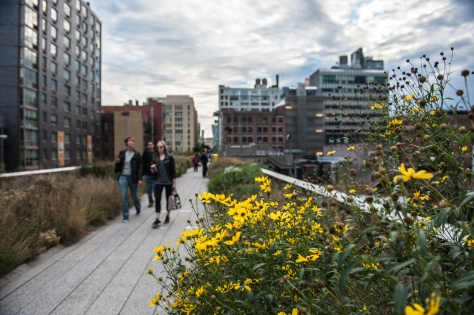 Fall daisies on the High Line