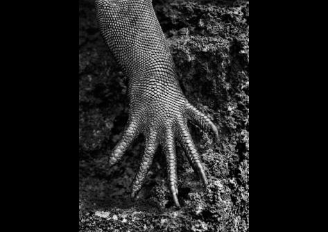 "From the series, ""GENESIS. Copyright: Sebastio Salgado, Amazonas Images"