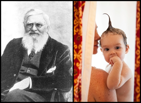 Two Great Thinkers: Alfred Russel Wallace, and my kid, Aniko J Newsom