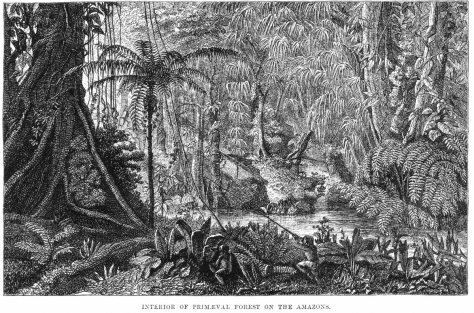 "Plate- ""Poison dart hunting"" from AR Wallace's journey into the Amazon"